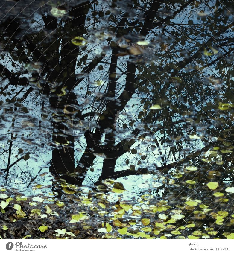 autumn day Autumn Puddle Seasons Tree Leaf Reflection Water Rain Branch