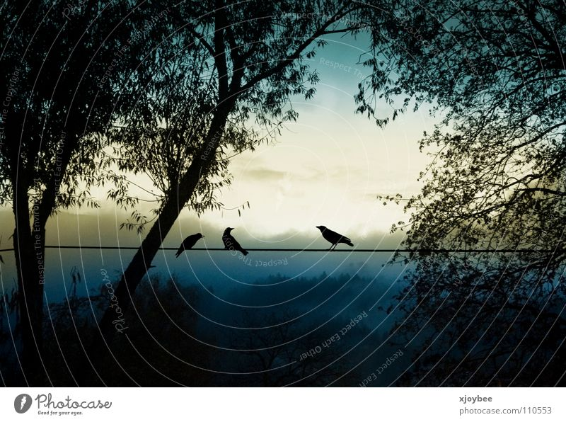 in the morning Morning Bird Sunrise Fog Animal Tree Panorama (View) Autumn Silhouette Dawn Cable Landscape