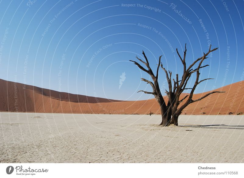 Blue Red Calm Death Landscape Africa Desert Transience Beach dune Skeleton Badlands Namibia Namib desert Acacia Sossusvlei