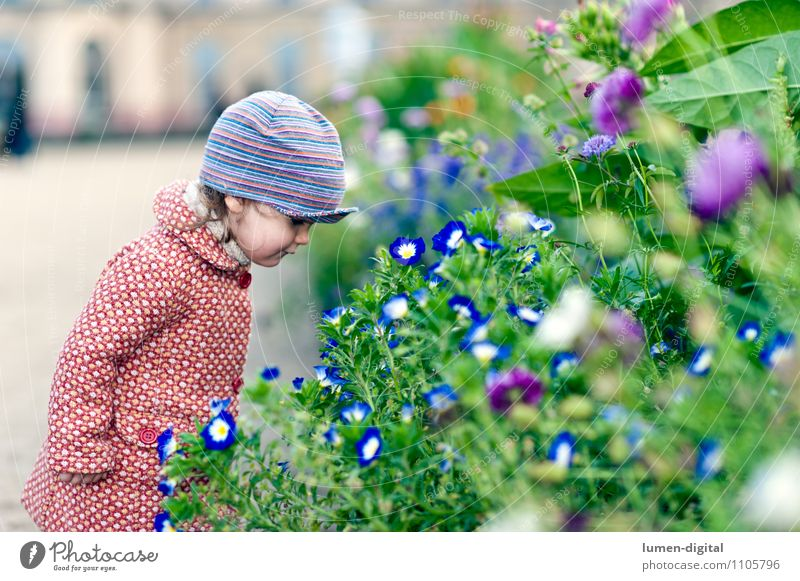 Child looks at flowers Joy Happy Girl 1 Human being 1 - 3 years Toddler Nature Autumn Flower Park Coat Cap Stand Friendliness Small Blue Green Red on one's own