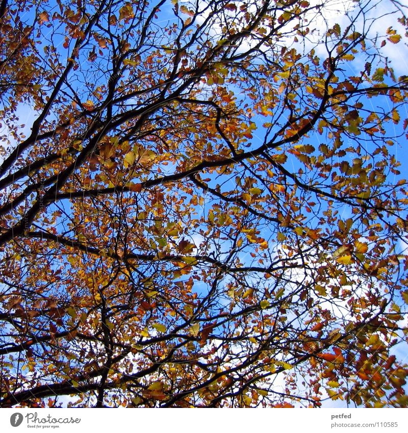 My beloved autumn Autumn Winter Tree Leaf Clouds White Brown Yellow Branched Seasons Sky Nature Life Blue Weather Limp