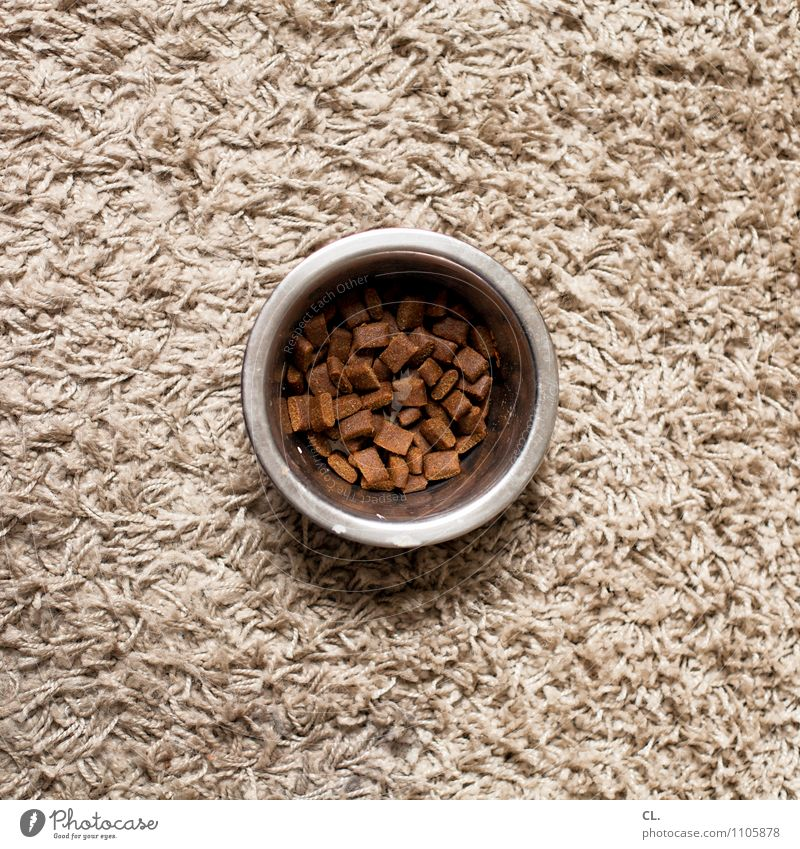 a whole guy Living or residing Flat (apartment) Dog Food bowl Carpet Dog food Eating Brown Colour photo Interior shot Deserted Day Bird's-eye view