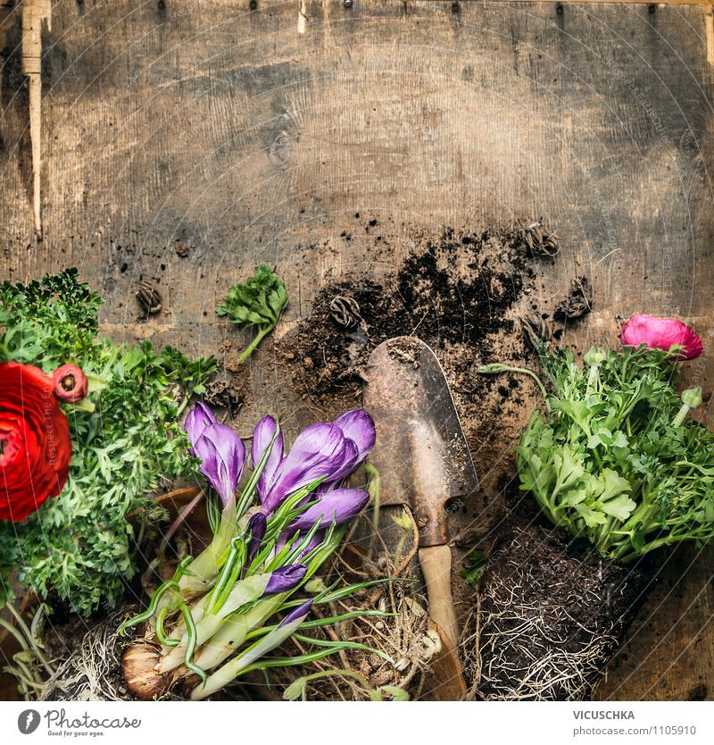 Garden table with shovel, flowers and soil Style Design Summer Table Nature Plant Flower Background picture Composing Pot plant Shovel Old Wooden table