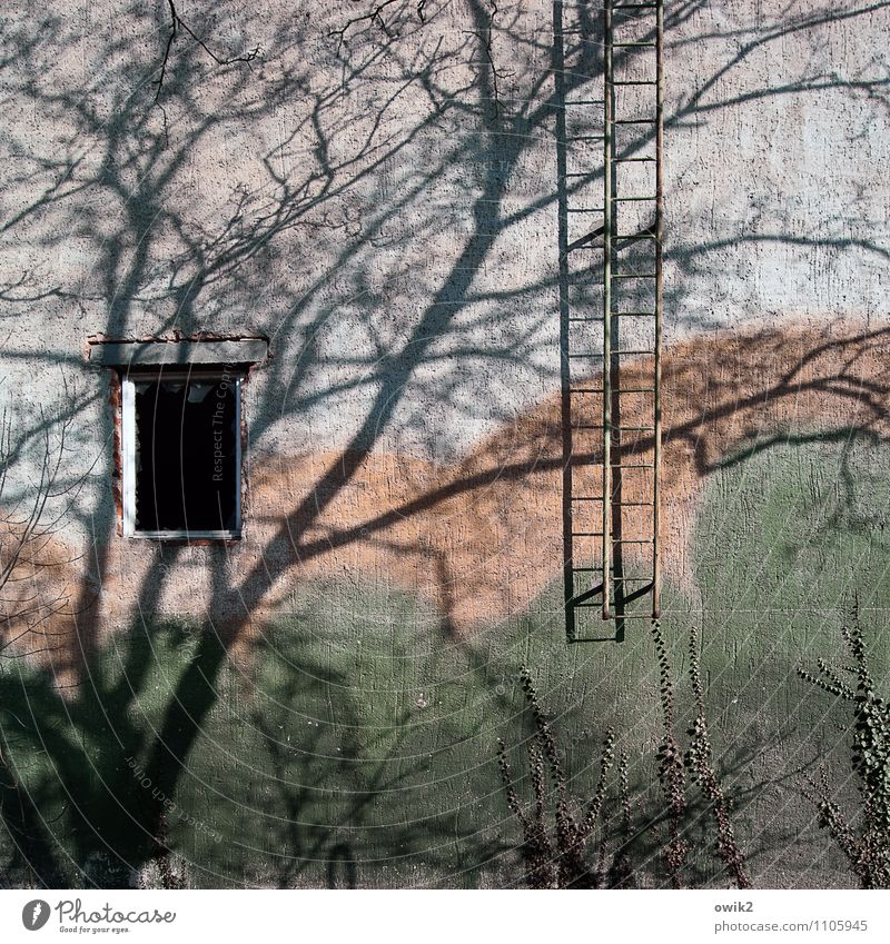 emergency exit Environment Nature Beautiful weather Plant Tree Branch Twigs and branches Wall (barrier) Wall (building) Facade Window Fire ladder Patient Calm
