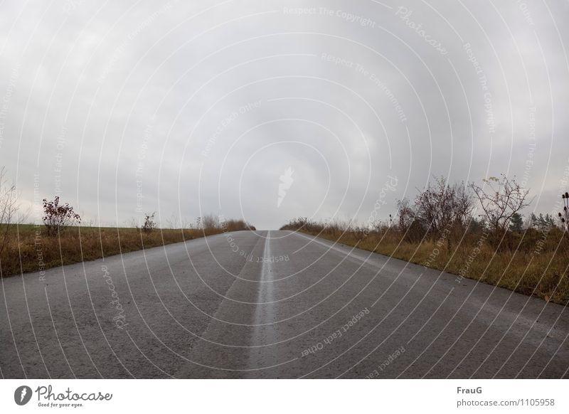 Sky Clouds Street Autumn Grass Lanes & trails Horizon Bushes Curiosity Hill Tracks Upward Expectation Dreary