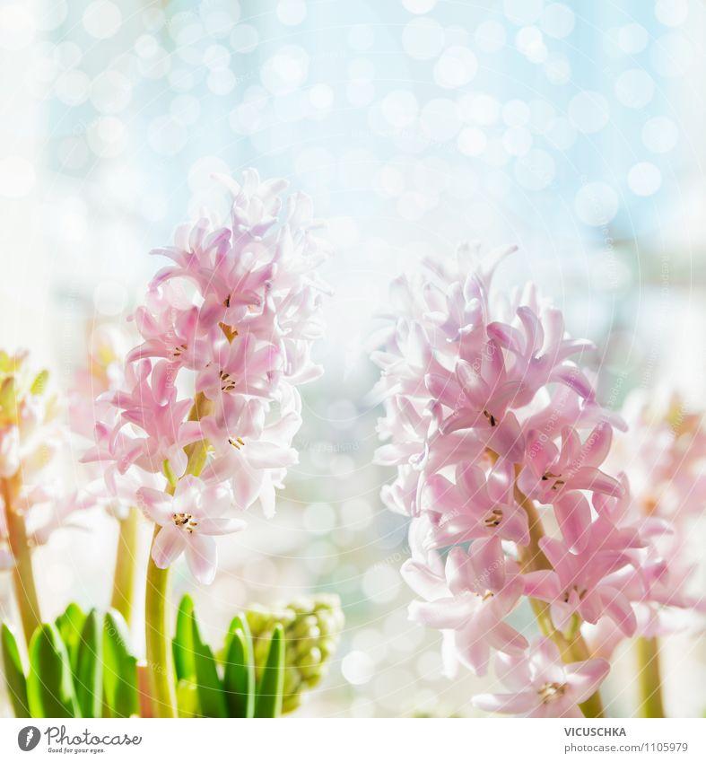 Nature Plant Flower Joy Love Spring Interior design Style Background picture Garden Lifestyle Moody Pink Design Decoration Birthday
