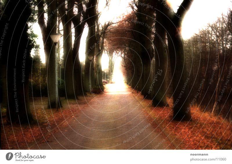 Road to heaven Avenue Autumn Overexposure Street Sun