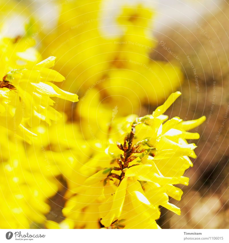 Nature Plant Environment Yellow Emotions Blossom Brown Bright Esthetic Blossoming Simple Hope
