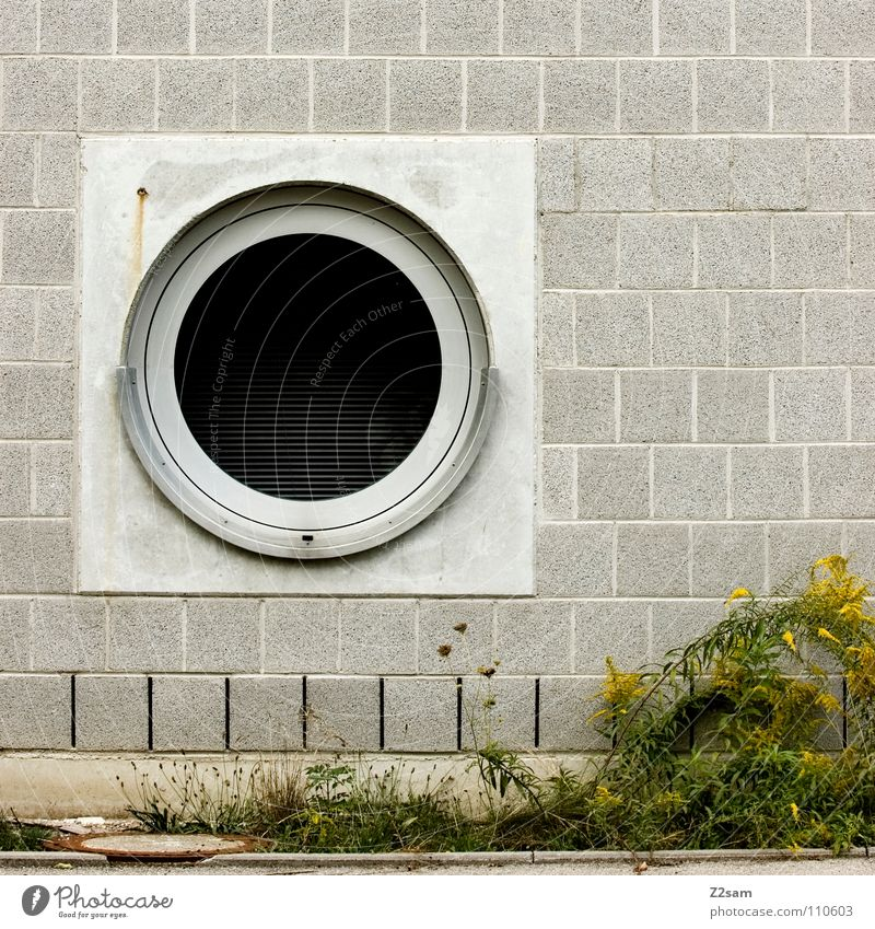 hatch or washing machine Hatch Window Graphic Simple Brick Wall (building) Geometry Green Plant Meadow Concrete Growth Overgrown Black Opening Entrance Way out
