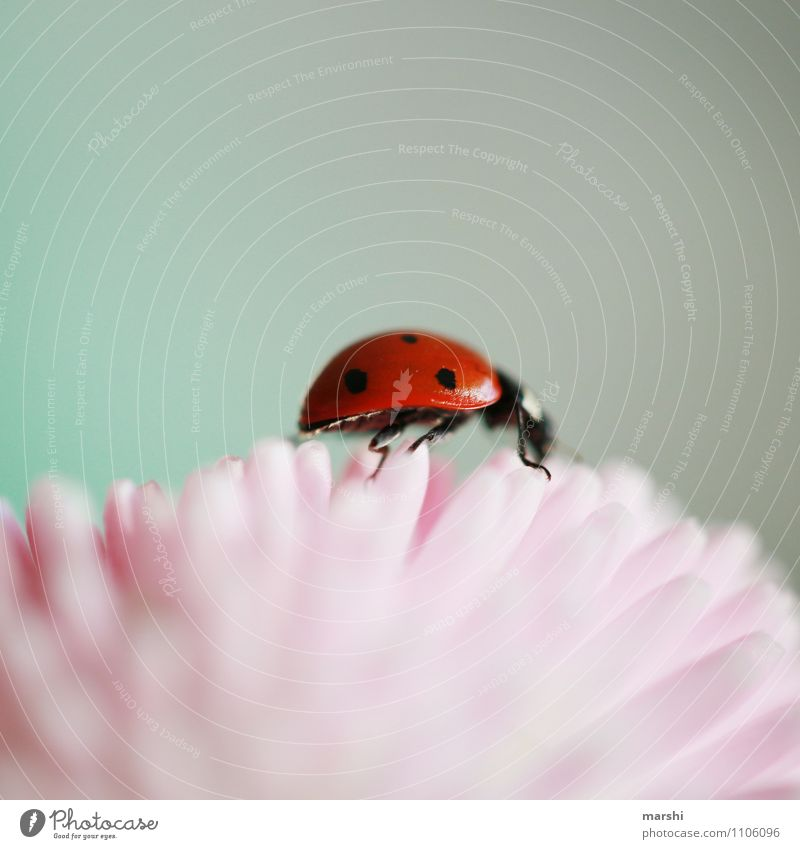 Nature Plant Leaf Animal Spring Blossom Small Moody Climbing Blossom leave Spotted Ladybird Good luck charm