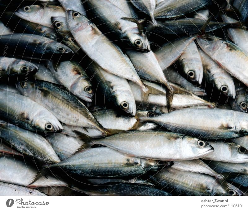 Nature Ocean Animal Environment Eyes Death Sand Lie Food Dirty Fresh Nutrition Fish Cooking & Baking Trash Gastronomy