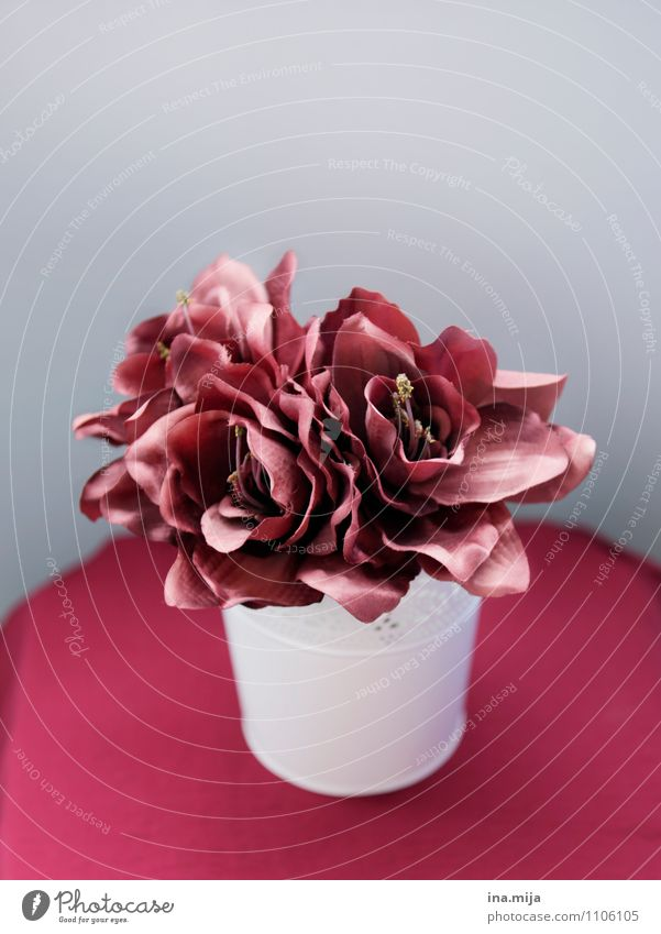 Nature Plant Beautiful Red Flower Blossom Natural Gray Decoration Esthetic Kitsch Bouquet Fragrance Still Life False Odds and ends