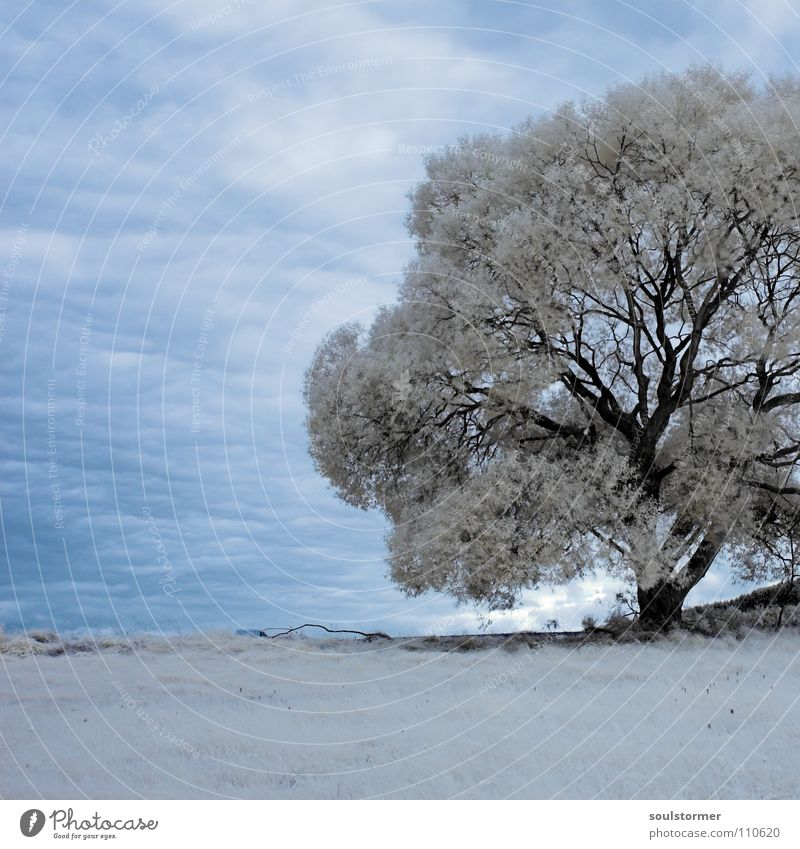 Tree trapped in square! Passenger train Infrared Infrared color Wood flour Clouds Grass Mountain range Hill Leaf White Gray Black Sky Surrealism False coloured