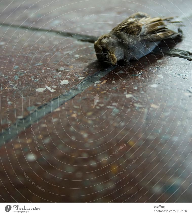 Cold Death Bird Grief Ground End Lie Transience Distress Goodbye Sparrow Dead animal