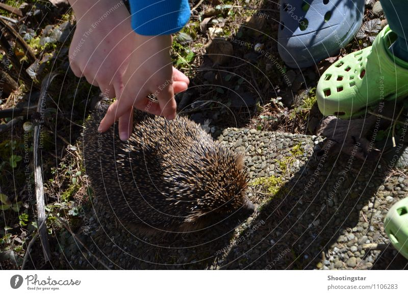 touch it Environment Garden Animal 1 Exceptional Cool (slang) Friendliness Together Natural Cute Thorny Trust Love of animals Timidity Study Curiosity Hedgehog