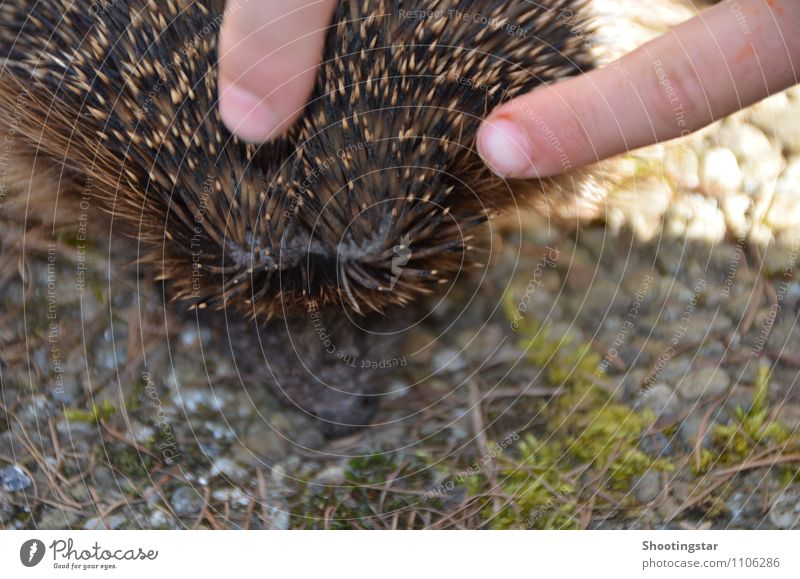 prickly Animal Wild animal 1 Stone Cuddly Thorny Protection Warm-heartedness Sympathy Friendship Love Love of animals Peaceful Hedgehog Colour photo