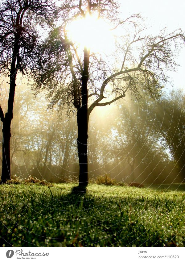 morning sunshine Sunbeam Light Awareness Tree Meadow Fog Autumn Celestial bodies and the universe Beautiful Morning Rope morgrntau Sky jarts
