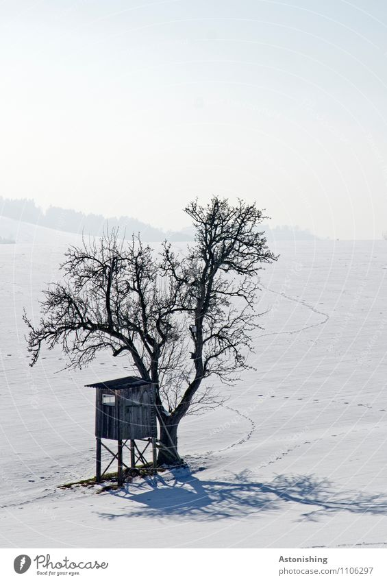 Tree and high stand Environment Nature Landscape Plant Sky Winter Climate Weather Ice Frost Snow Snowfall Meadow Hill Hut Stand Cold Blue Gray Black White