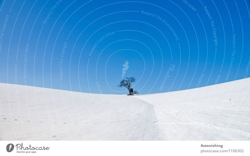 lonely tree in the snow Environment Nature Landscape Plant Sky Cloudless sky Winter Weather Ice Frost Snow Tree Meadow Hill Stand Blue Black White Hunting Blind