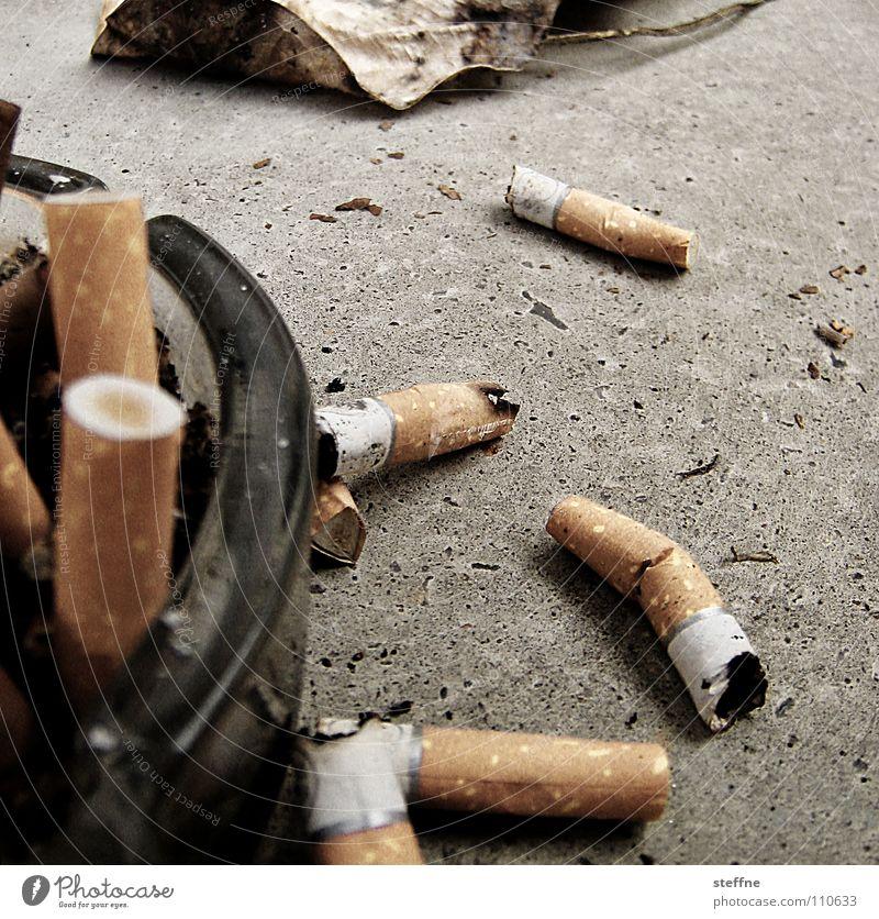 Summer Leaf Autumn Feasts & Celebrations Smoking Smoke Balcony Club Cigarette Tar Ashes Filter Shellfish Ashtray Tobacco Lung