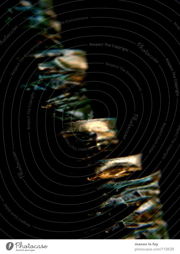 Guess what I Black Green Curved Spiral Light Blur Obscure Copper String Movement Crazy Reflection Gold