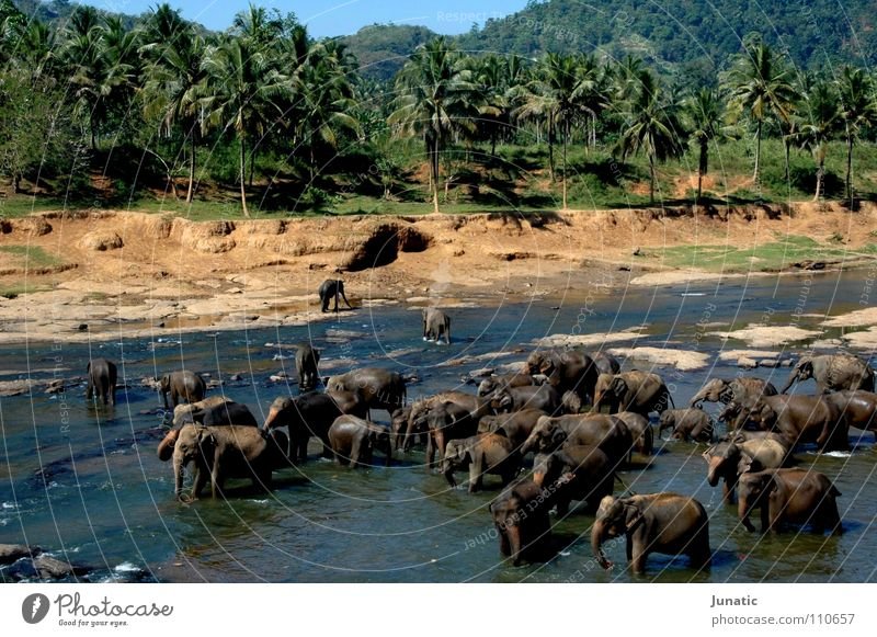 rush hour Elephant Virgin forest Riverbed India vibrant colours intensity Water