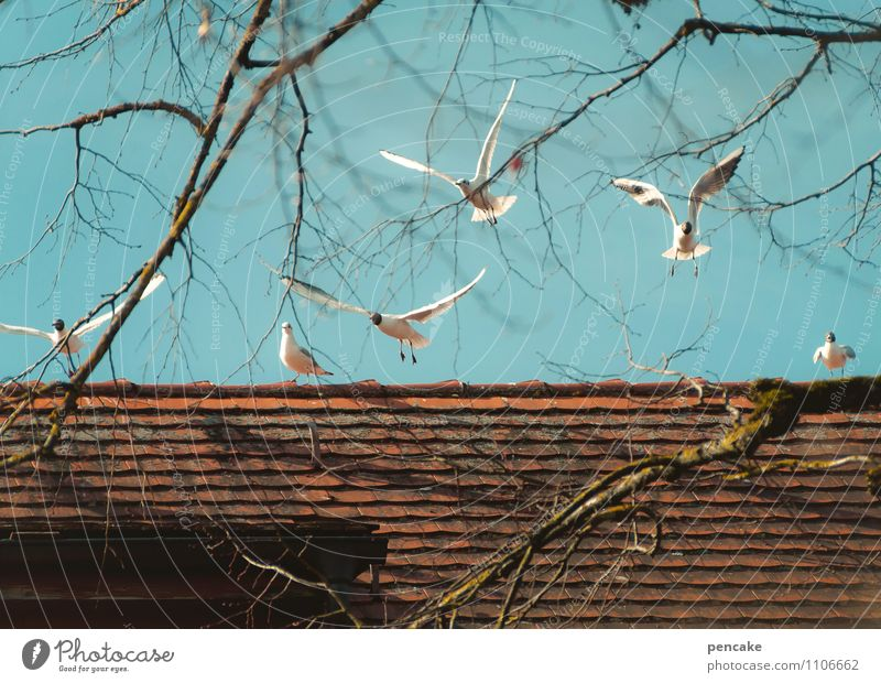 watermark   seagull scream Elements Sky Spring Tree Town House (Residential Structure) Roof Bird Group of animals Flock Sign Rutting season Movement Flying