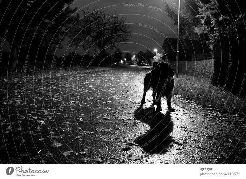 November night Night October Autumn Leaf Dog Lantern Street lighting Wet Damp Mud Rain Unclear Mysterious Dark Lifeless Gray Dreary Twilight Drizzle Black