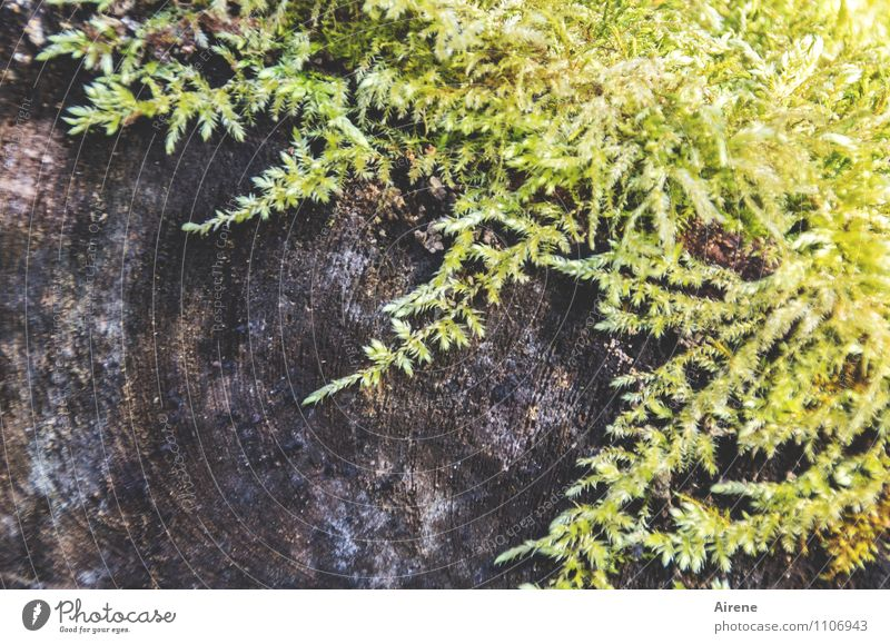 accretion Plant Moss Tree trunk Wood Growth Brown Yellow Green Sustainability Nature Damp Bright yellow Bright green Woody Exterior shot Deserted