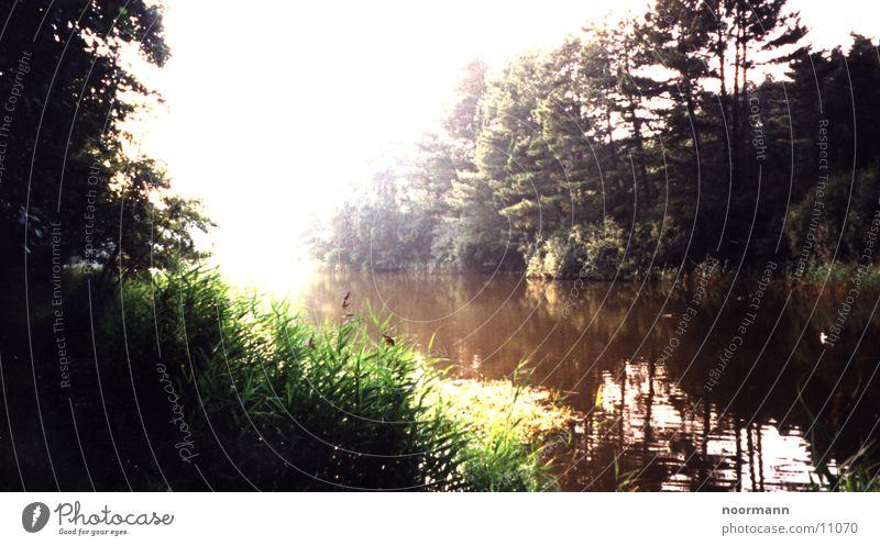 peace on earth Lake Forest Still Life Green Nature still love Sun
