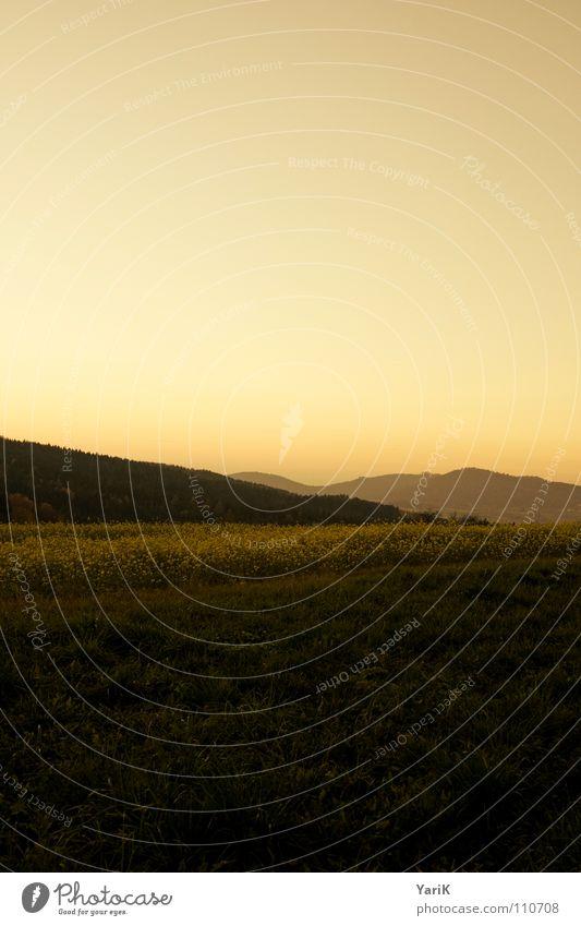 Sky Forest Dark Cold Autumn Meadow Grass Mountain Orange Field Fog Horizon Hill Dusk Canola Canola field