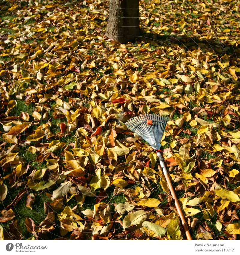 typical autumn work. Autumn Leaf Rake Tree Work and employment Multicoloured Grass Compost Autumnal foliage work leaf fall Cover defoliate