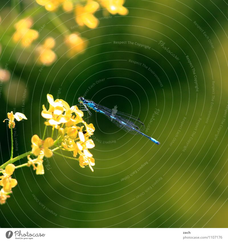 docked Spring Summer Plant Flower Grass Bushes Leaf Blossom Foliage plant Garden Meadow Animal Wild animal Insect Dragonfly 1 Flying Blue Yellow Green