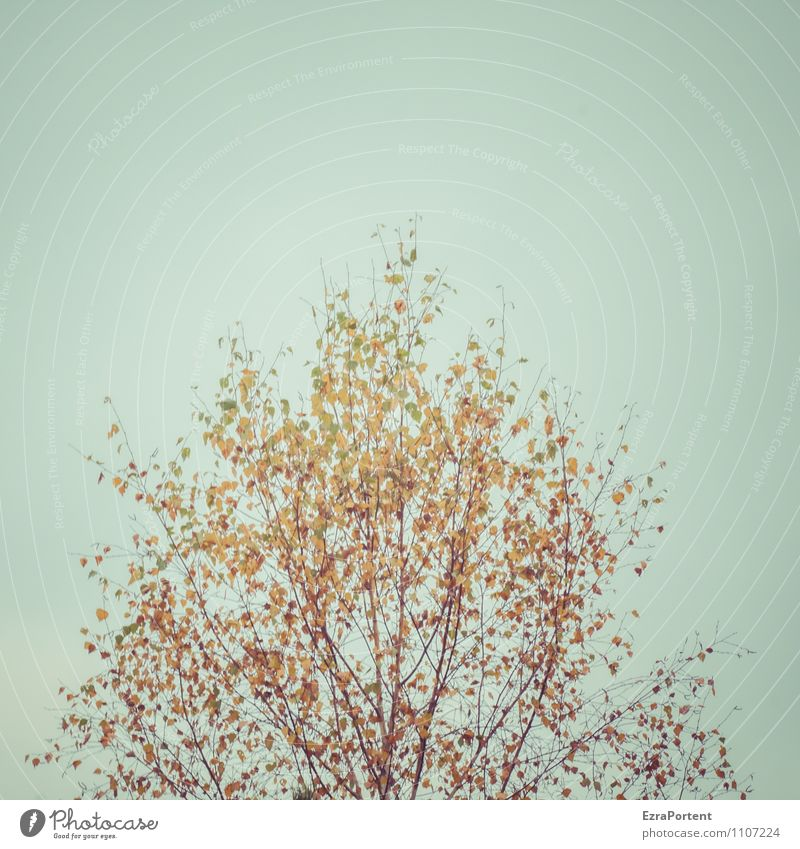 Sky Nature Blue Plant Tree Leaf Landscape Forest Environment Yellow Autumn Natural Brown Orange Illuminate Esthetic