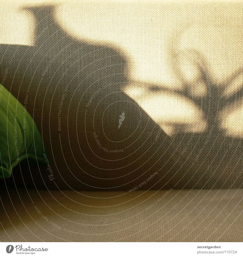 What do you see? Sofa Playing Shadow play Cloth Cushion Green Gray Cozy Slouch Television Material Living room Furniture Calm Relaxation Leisure and hobbies