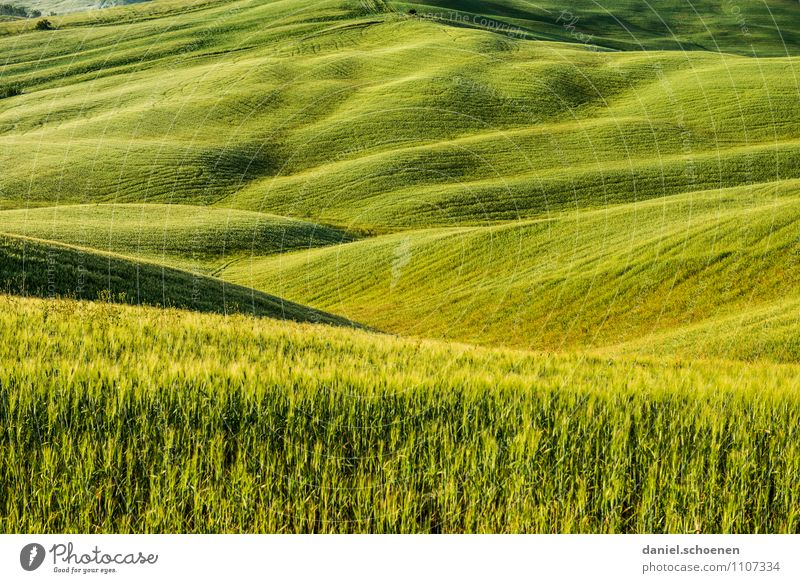 Vacation & Travel Green Landscape Far-off places Environment Yellow Field Hill Agricultural crop