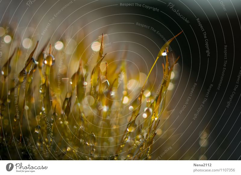 Watermark | Morning Dew Environment Nature Plant Earth Air Spring Summer Moss Garden Park Meadow Forest Esthetic Glittering Small Wet Yellow Rainwater