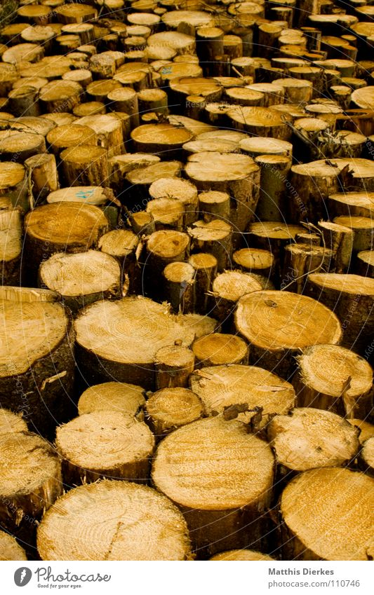 Nature Tree Forest Wood Multiple Round Tree trunk Stack Heap Heavy Damage Raw Spruce Beech tree Firewood Raw materials and fuels