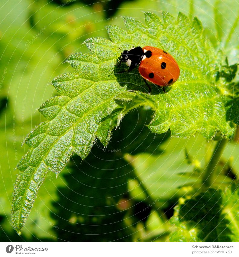 Green Red Black Point Airplane landing Beautiful weather Ladybird Medicinal plant Stinging nettle Weed