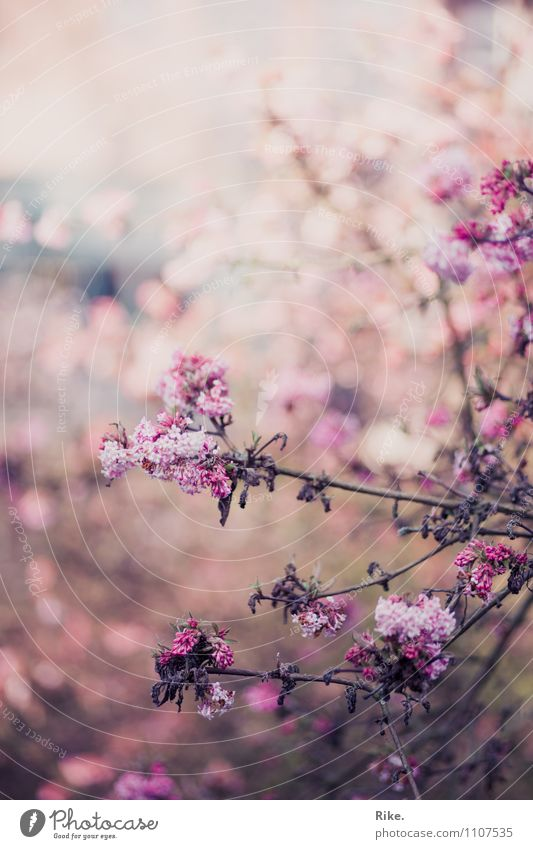 Nature Plant Beautiful Summer Environment Sadness Spring Blossom Autumn Natural Pink Bushes Transience Romance Decline End