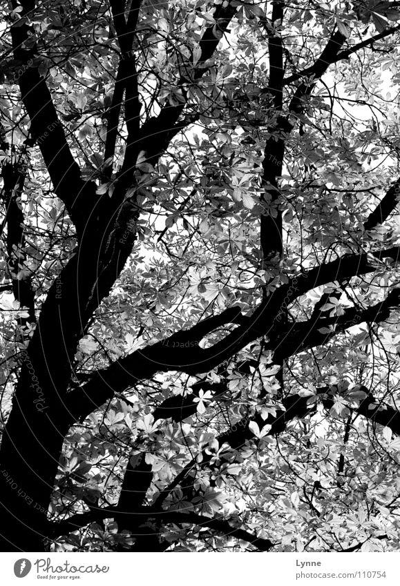 grey autumn Tree Leaf Autumnal weather Seasons Black White Forest Branch