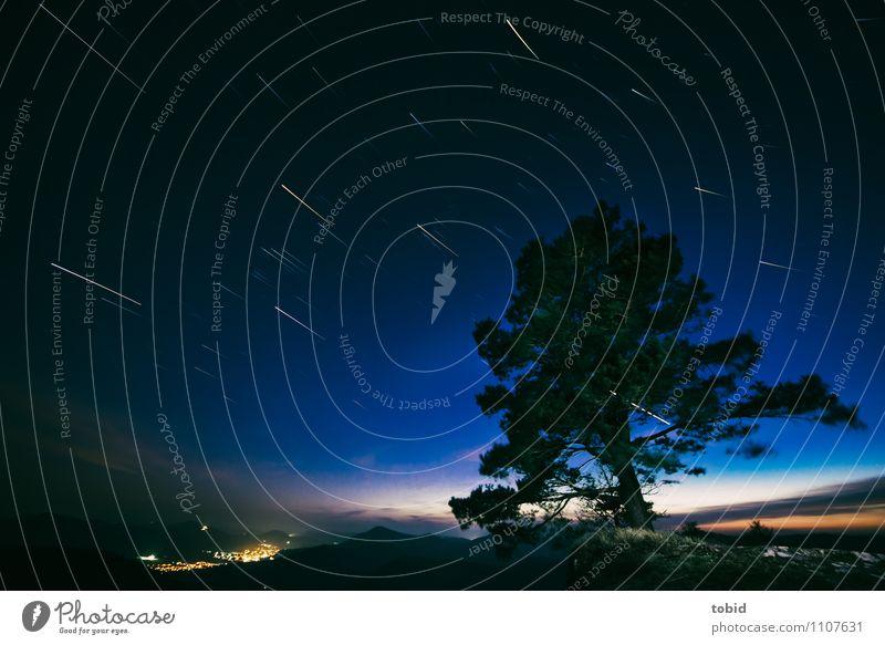 Sky Nature Plant Tree Landscape Far-off places Dark Forest Mountain Movement Grass Horizon Glittering Idyll Elegant Stars