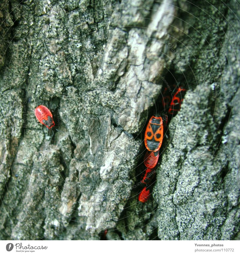 Nature Tree Red Animal Loneliness Black Autumn Gray Small Multiple Insect Square Accumulation Beetle Tree bark Exclusion