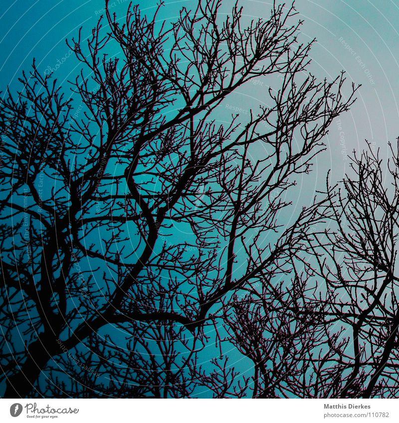 Sky Blue Green Tree Clouds Dark Autumn Lighting Death Moody Rain Fog Fear Crazy Dangerous Fantastic