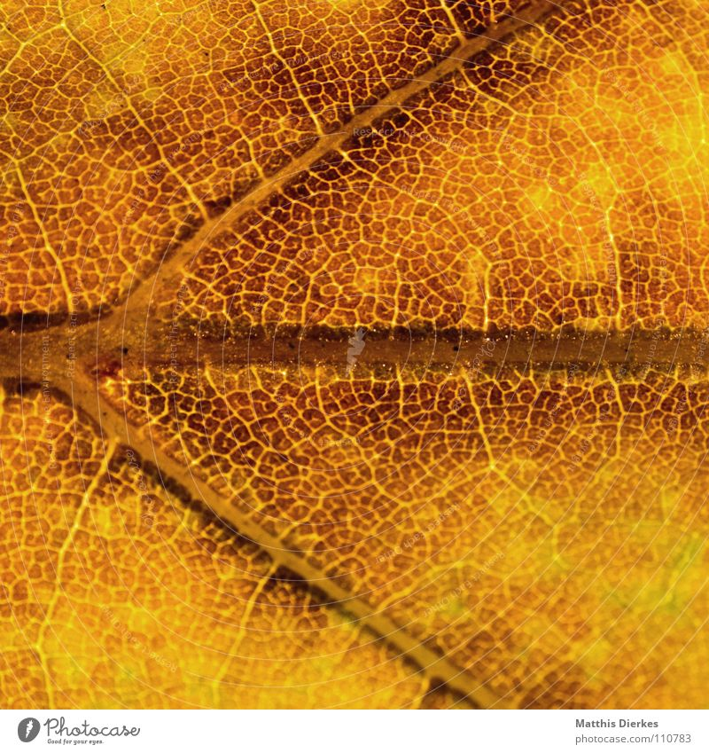 Yellow Autumn Background picture Autumn leaves Leaf Autumnal Section of image Autumnal colours Rachis