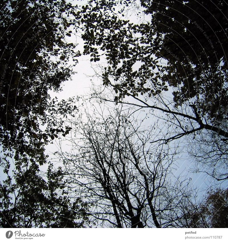 Treetops VII Autumn Forest Leaf Winter Black White Under Clouds Sky Branch Twig Nature Blue Shadow Tall To fall Wind