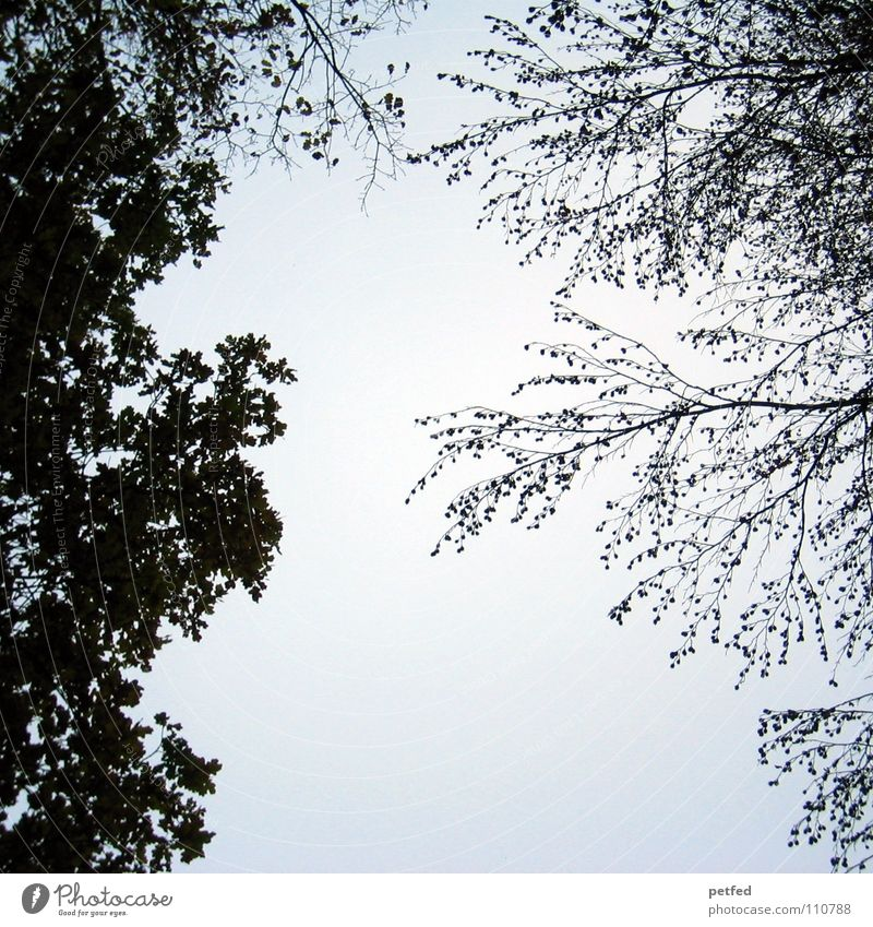 Treetops VIII Autumn Forest Leaf Winter Black White Under Clouds Sky Branch Twig Nature Blue Shadow Tall To fall Wind