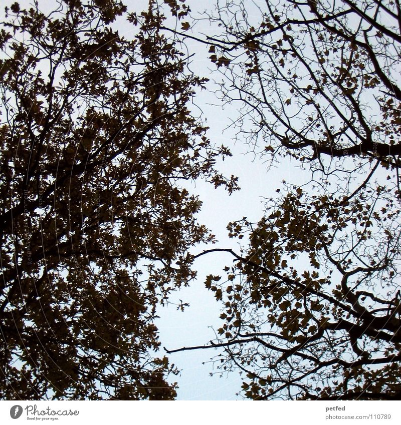 Treetops IX Autumn Forest Leaf Winter Black White Under Clouds Brown Sky Branch Twig Nature Blue Shadow Tall To fall Wind