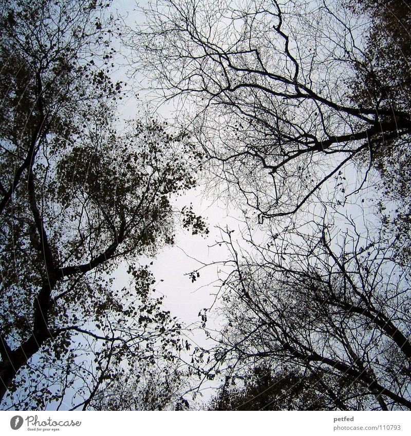 Treetops X Autumn Forest Leaf Winter Black White Under Clouds Sky Branch Twig Nature Blue Shadow Tall To fall Wind