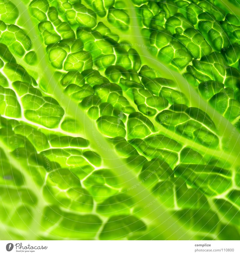 savoy cabbage Savoy cabbage Cabbage Cooking Kitchen Healthy Healthy Eating Fresh Salad leaf Nutrition Green Vessel Rachis Light Lighting Close-up